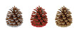 set of christmas decorations. isolated pine cones with red, silver and gold glitters