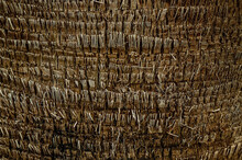 The Bark Texture Of The Palm Trunk. Beautiful Natural Exotic Textural Wooden Background With The Possibility Of Inserting Text. Macrofotography, Close Up