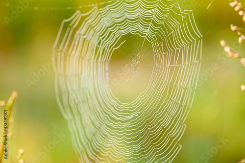 Valokuva Big cowweb among blades in field in sun light at dawn