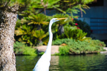 A White Heron Bird With A Long...