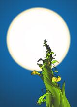 Beanstalk Drawing Illustration...