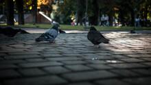 Pigeons In A Public Place,pige...