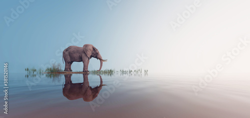 Lonely elephant stands on foggy lake
