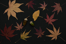 Autumn Leaves And Acorns On Bl...