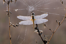Early In The Morning Dragonfly...