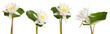 Set of beautiful lotus flowers on white background. Banner design