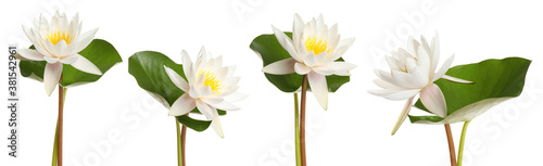 Fotografía Set of beautiful lotus flowers on white background. Banner design