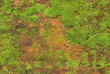 Close Up Of Green Moss Texture...