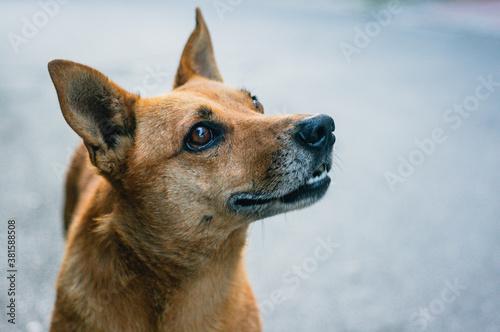 Fotografía Portrait of sad beautiful street dog with kind eyes