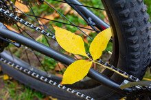 Autumn Fallen Leaves On A Bicy...