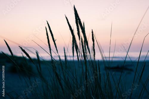 Fototapeta Silueta de juncos en una playa al atardecer