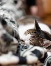 お昼寝中 キジトラ猫