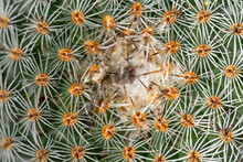Cactus Top View Background Clo...