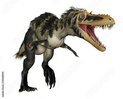 Alioramus dinosaur roaring isolated in white background - 3D render Canvas Print