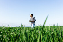 Portrait Of Farmer Standing In Young Wheat Field Examining Crop.