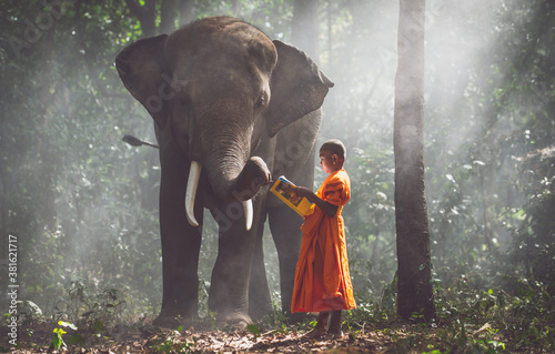 Thai monks studying in the jungle with elephants Canvas