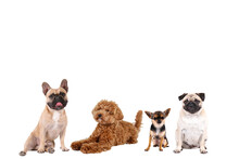Collage Of Different Purebred Dogs. Close Up, Copy Space, Isolated Background.