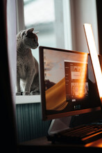 Cat And Pc