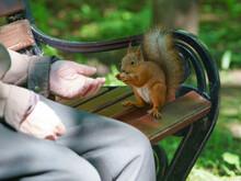 Feeding A Little Funny Squirre...