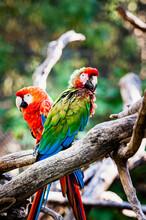 Magnifique Perroquet Ara Aux P...