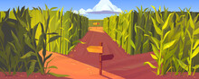 Cornfield With Wooden Road Pointers And High Green Plant Stems. Choice Of Way Concept. Landscape With Signposts Pointing On Paths Fork. Labyrinth, Maze, Choosing Direction, Cartoon Vector Illustration