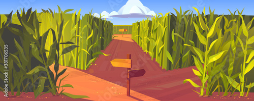 Photo Cornfield with wooden road pointers and high green plant stems
