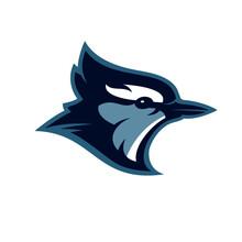 Blue Jay Head