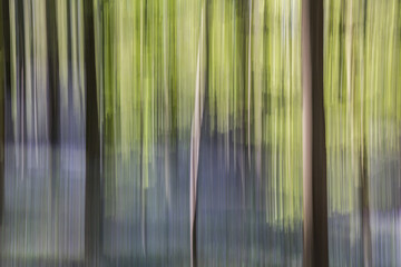 Abstract forest blurred trees,abstract motion of trees in the forest