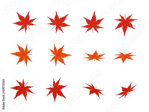 Valokuva 紅葉 様々な向き バリーエーションセット