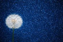 Dandelion Flower On Blue Glitt...