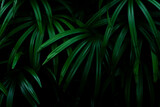 tropical green palm leaf and shadow, abstract natural background, dark tone - 381777906