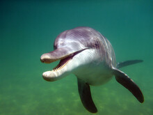 A Curious Dolphin Drops In To ...