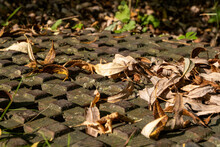 Dried Fallen Leaves On Storm Drain Cover