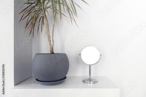 Home interior bush dracaena and mirror