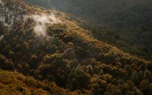 Beech Forest In Autumn. Golden...