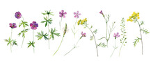 Set Of Watercolor Wild Flowers Of Tansy, Geranium And Carnation