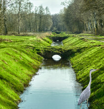 Drainage Ditch To Drain The Bog Area, With Small Footbridges, A Grey Heron And Embankments With Grass