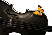 Melody Concept. Violin And Colorful Orange Butterfly Close-up On White Background. Violin For Design