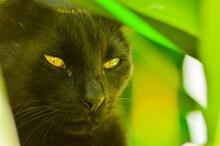Closeup Shot Of A Black Green-...