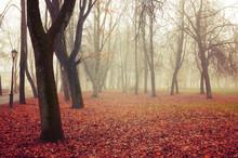 Fall November Landscape. Fall ...