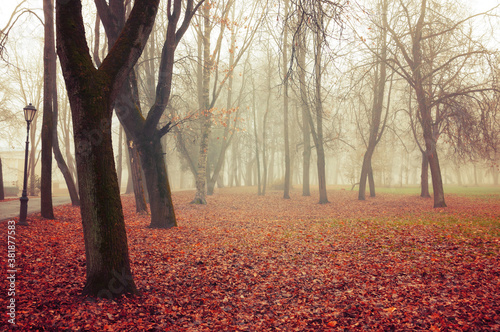 Obraz Fall November landscape. Fall in the city park. Bare trees and orange fallen leaves on the ground - fototapety do salonu