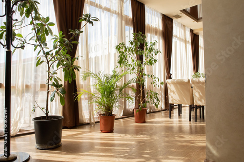 Interior in pastel colors using indoor plants: dracaena, ficus. Gentle beige background with green plants.