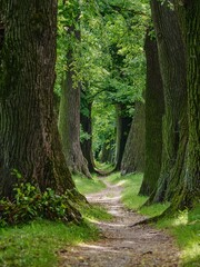A narrow path leading between majestic trees
