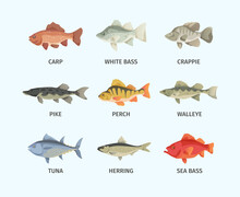 River And Sea Fish Set. Huge S...
