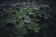 canvas print picture - Pflanzen Nahaufnahme