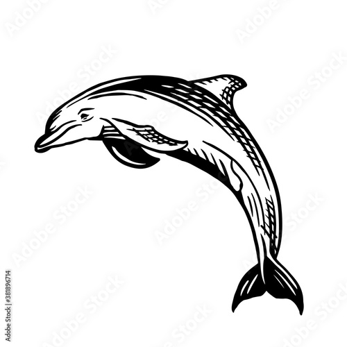 Fotografija Dolphin sketch style. Sea animal vector vintage illustration