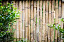 Bamboo Fence And Leaves