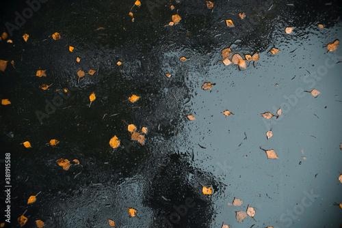 Autumn yellow leaves on wet asphalt after rain, top view Canvas Print