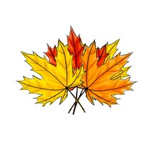 Composition Bouquet Of Digital Sketch Maple Leaf. Arrangement Of Autumn Colored Foliage Isolated On White. Watercolor Imitation Bright Dark And Light Colors With Stains. Fall, Bundle, Natural Product