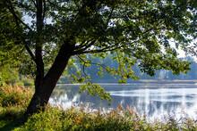Jezioro Komosa W Puszczy Knysz...